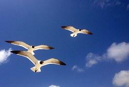 seagulls-401461__180