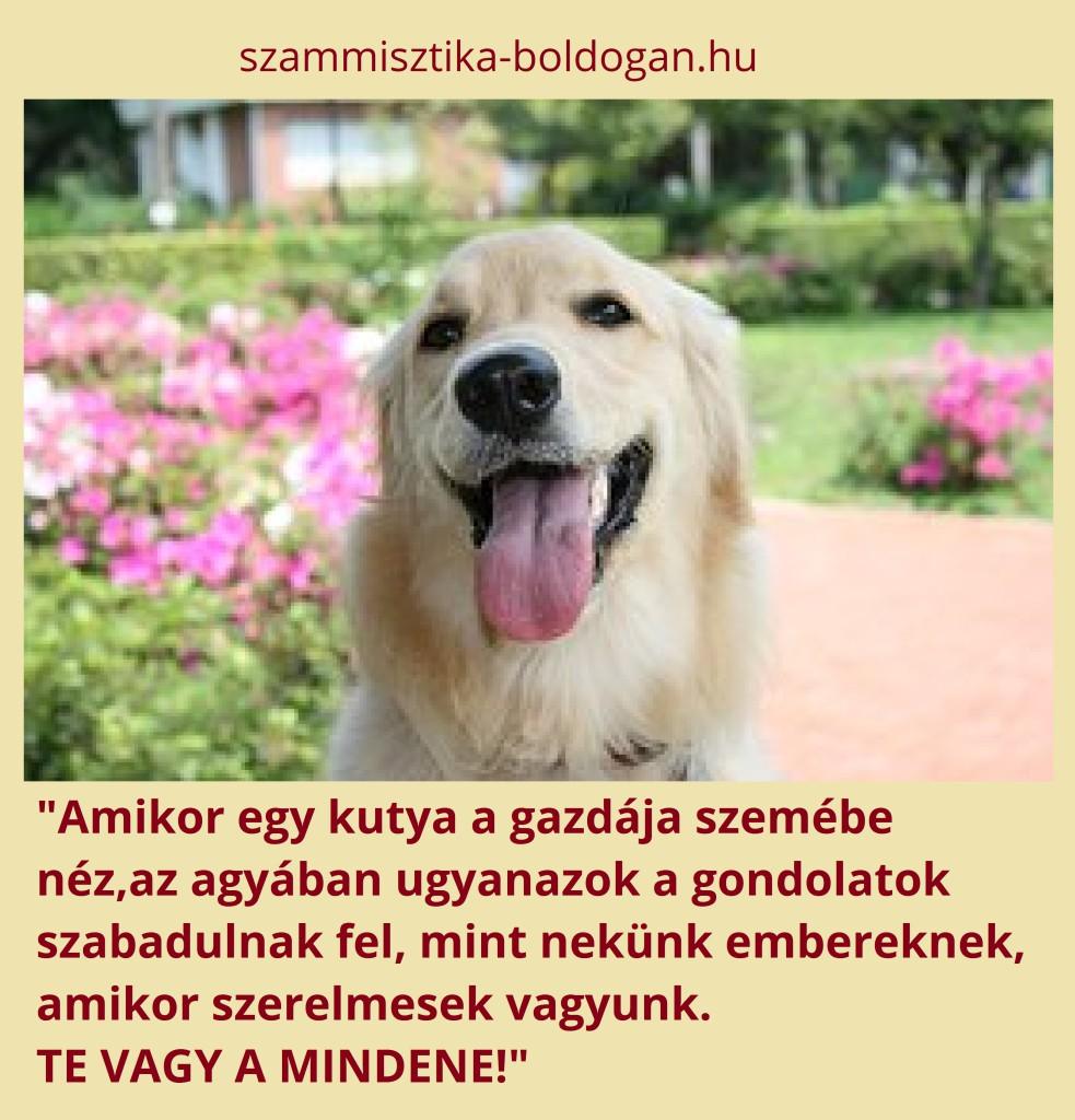 kutya, idézet