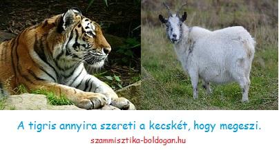 tigris-kecske