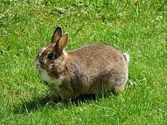 rabbit-995045__180