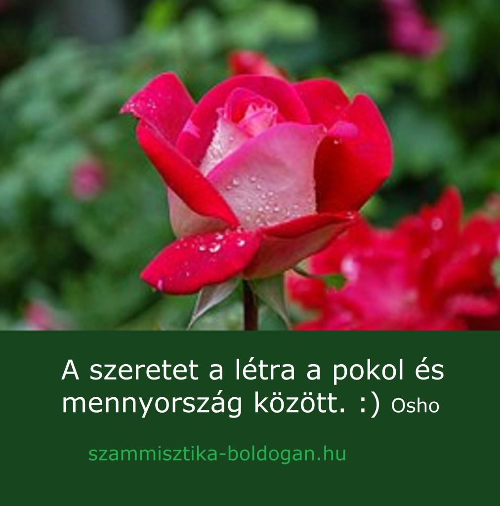 osho idézet, szeretet
