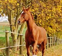 kínai asztrológia, horse