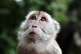 majom hónapja, 2016. augusztus