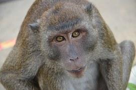 jang tűz majom hónap és év