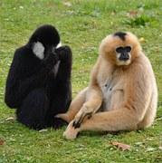 2016. augusztus, majom év és majom hónap a kínai asztrológiában