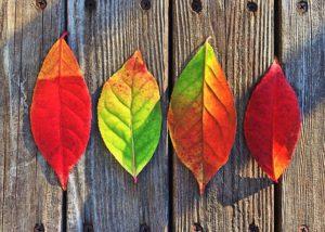 leaves-1051937__340