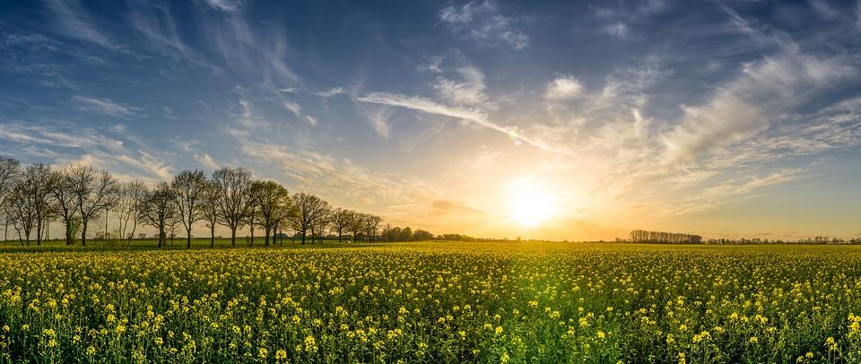 A képhez tartozó alt jellemző üres; oilseed-rape-2135026_960_720.jpg a fájlnév